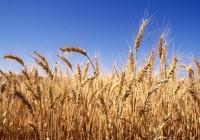 В России будут регулировать хранение зерна
