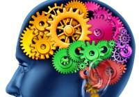Объём мозга зависит от физической активности
