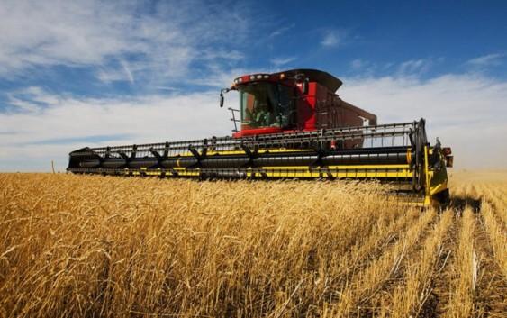 Как выросло производство зерна в 2015 году?