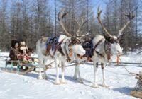 В России изобрели спутниковые ошейники для оленей и лошадей