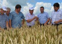 Алтайские фермеры получат 500 млн руб.