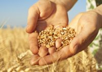 Сколько Россия заработала на сельском хозяйстве в 2018 году?