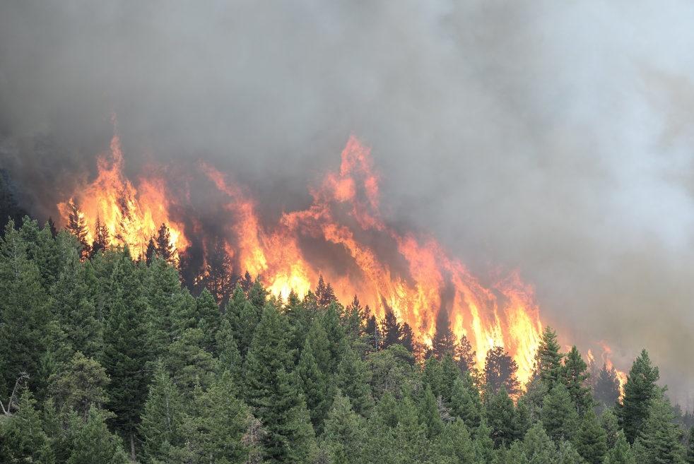 картинка верховой пожар гамака для