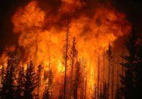 Счетная палата посчитала ущерб от лесных пожаров